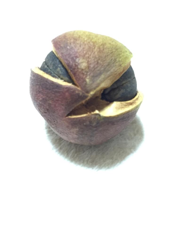 b0177103_01541285.jpg