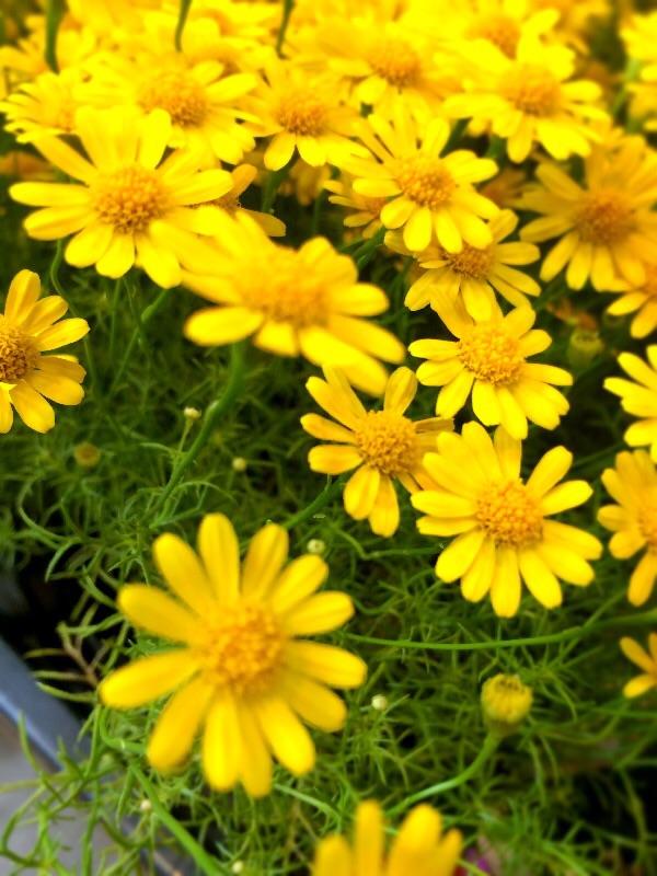 夏の花壇のリニューアルは?_a0060141_1339913.jpg