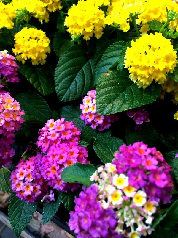 夏の花壇のリニューアルは?_a0060141_1339920.jpg