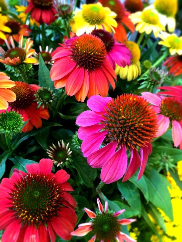 夏の花壇のリニューアルは?_a0060141_1339979.jpg