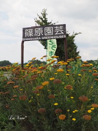 夏休み③原村_e0158653_22241956.jpg