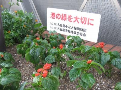 ガーデンふ頭総合案内所前花壇の植替えH28.8.17_d0338682_08551616.jpg