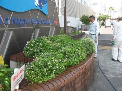 ガーデンふ頭総合案内所前花壇の植替えH28.8.17_d0338682_09042340.jpg