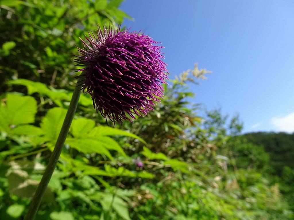 平山からニセイカウシュッペ山ピストン、8月11日-同行者からの写真-_f0138096_2285193.jpg