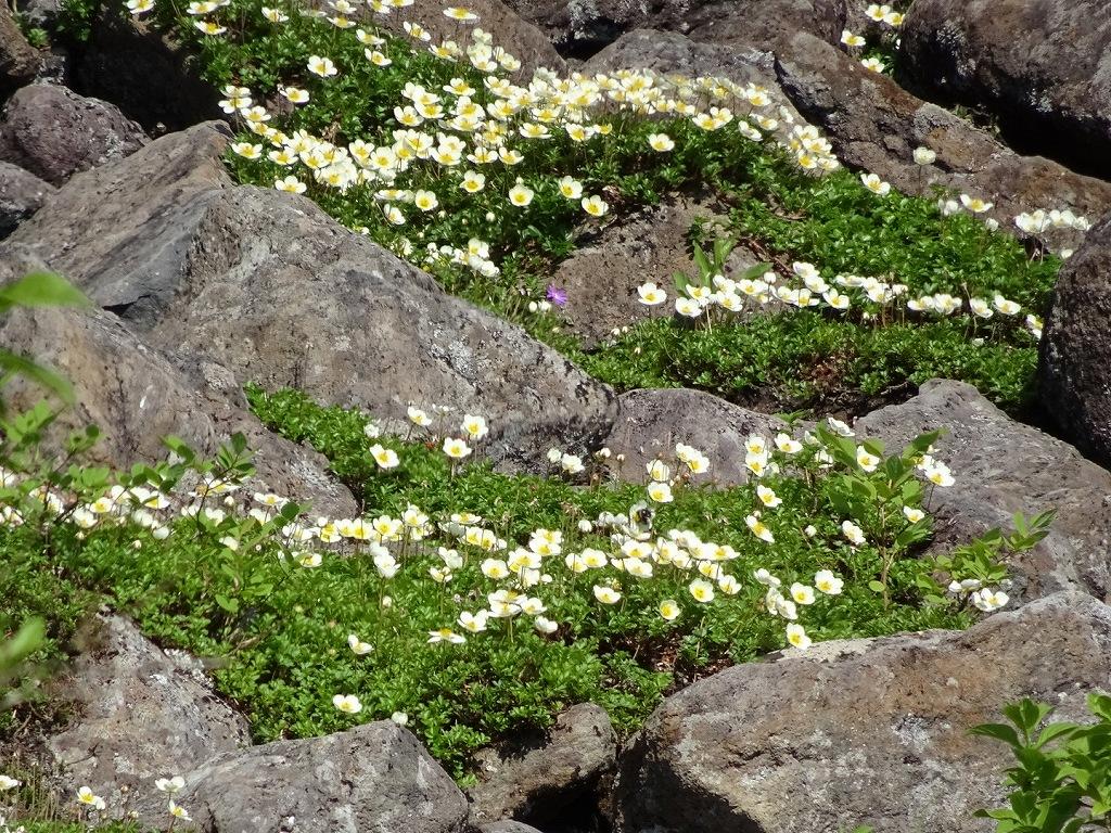 平山からニセイカウシュッペ山ピストン、8月11日-同行者からの写真-_f0138096_229032.jpg