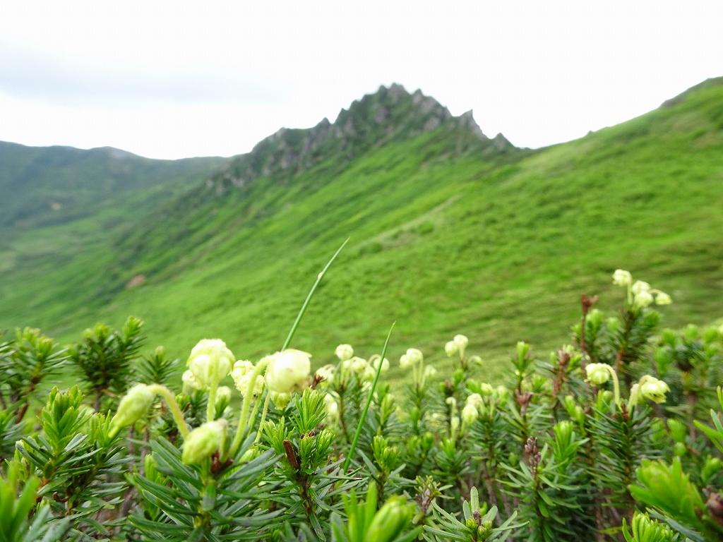 平山からニセイカウシュッペ山ピストン、8月11日-同行者からの写真-_f0138096_2292634.jpg