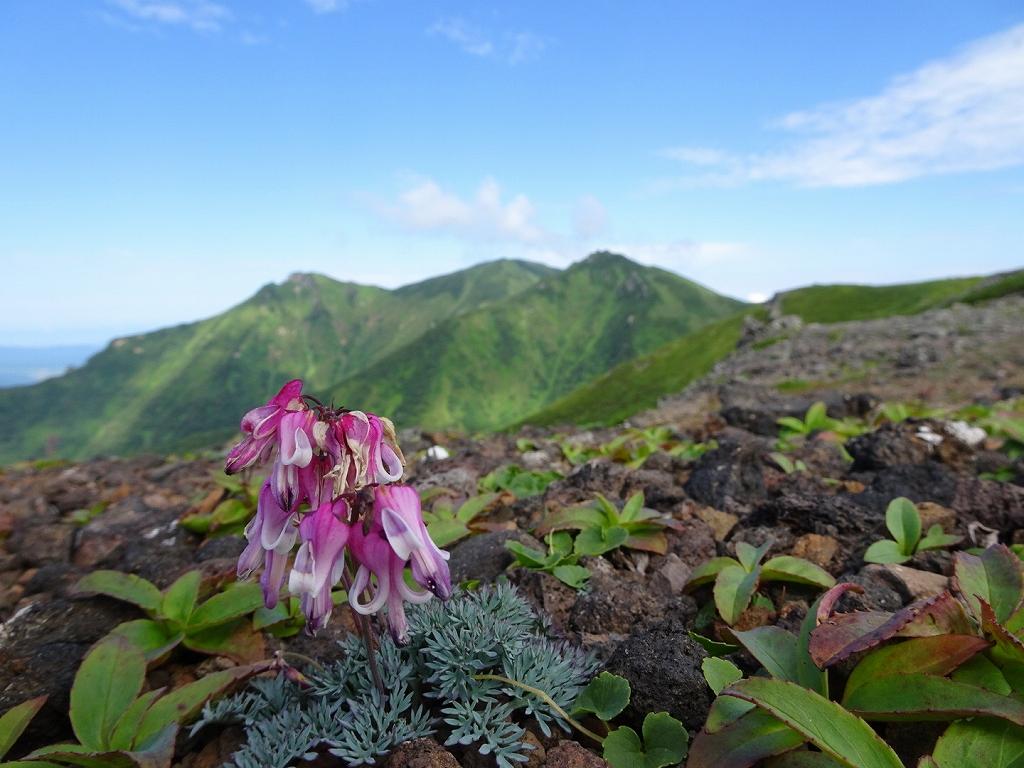 平山からニセイカウシュッペ山ピストン、8月11日-同行者からの写真-_f0138096_2293340.jpg