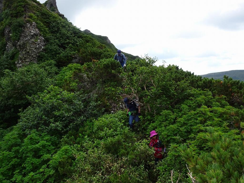 平山からニセイカウシュッペ山ピストン、8月11日-同行者からの写真-_f0138096_2294829.jpg