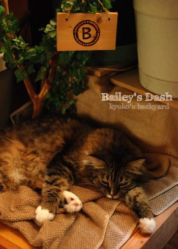 Baileyのダッシュを収穫♪_b0253205_04235033.jpg