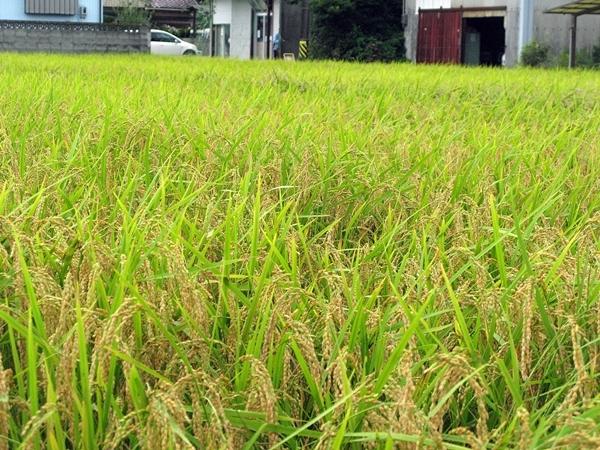 稲刈り_f0129726_22334585.jpg