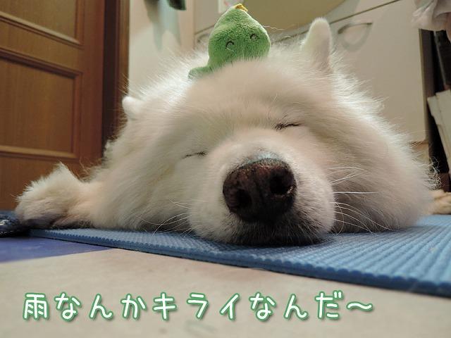 お散歩お休みデー_c0062832_10263062.jpg