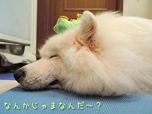 お散歩お休みデー_c0062832_10264225.jpg