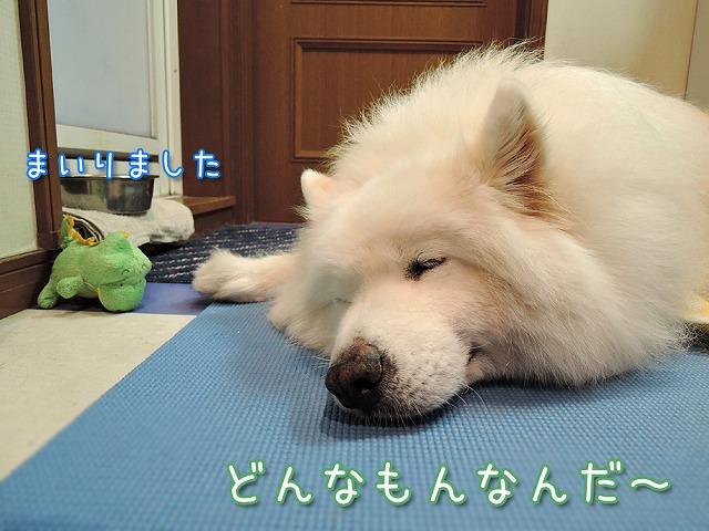 お散歩お休みデー_c0062832_10265394.jpg
