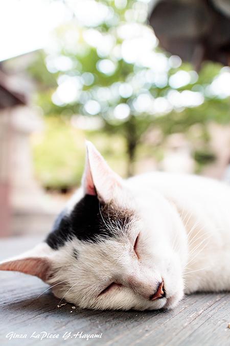 猫のいる風景 近所の黒白ちゃん_b0133053_0393121.jpg