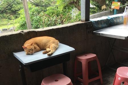 台湾旅行 二日目午前 猫村_d0075863_12472046.jpg