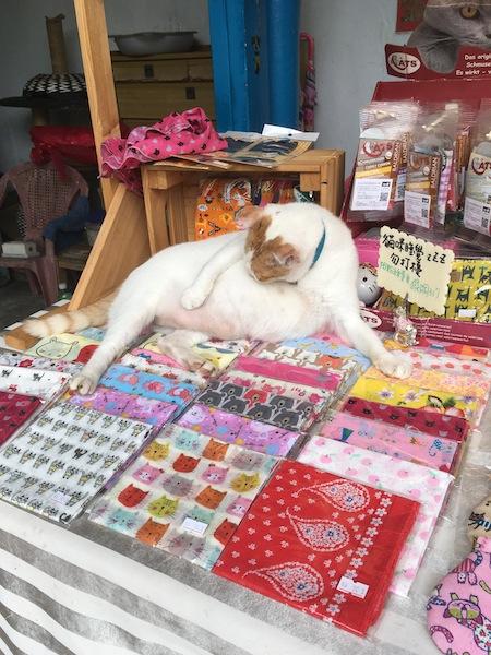 台湾旅行 二日目午前 猫村_d0075863_12482321.jpg