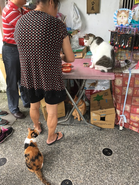 台湾旅行 二日目午前 猫村_d0075863_12505264.jpg