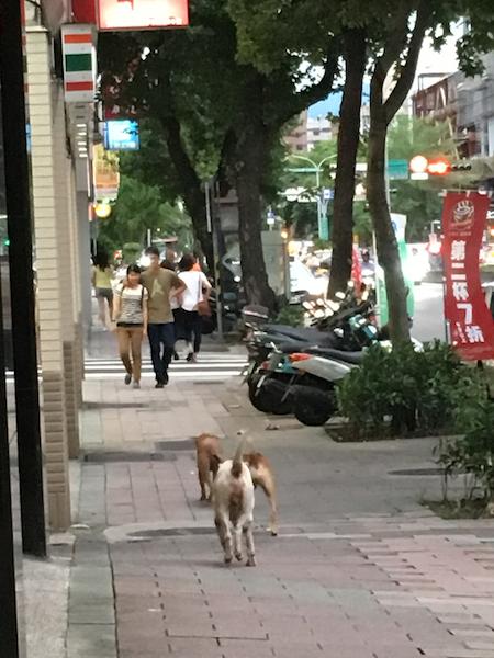 台湾旅行 二日目午後 九份_d0075863_14283172.jpg