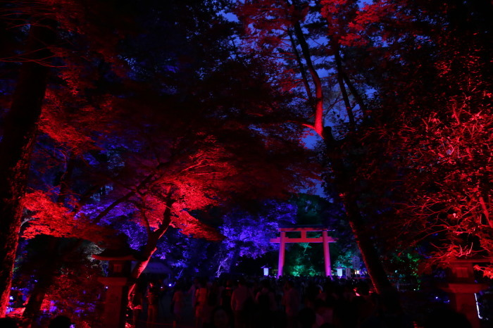 下鴨神社 糺の森の光の祭_f0021869_07413431.jpg