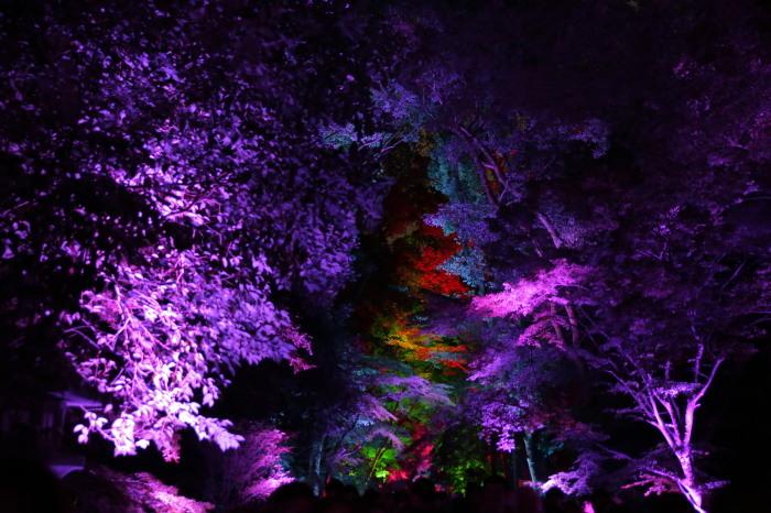 下鴨神社 糺の森の光の祭_f0021869_23480775.jpg
