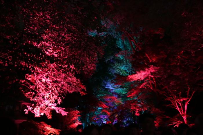 下鴨神社 糺の森の光の祭_f0021869_23514653.jpg