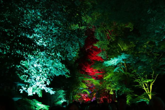 下鴨神社 糺の森の光の祭_f0021869_23521793.jpg