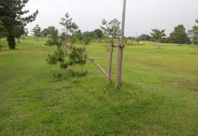 平成28年6月 ゴルフ場 管理作業 その3_d0338682_10472045.png