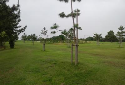 平成28年6月 ゴルフ場 管理作業 その3_d0338682_10473993.png