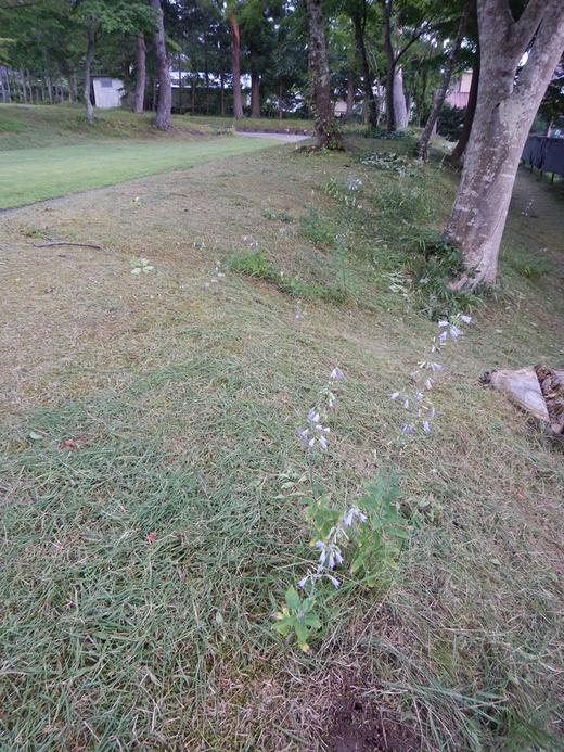 草刈りとハチ退治_c0111229_19535767.jpg