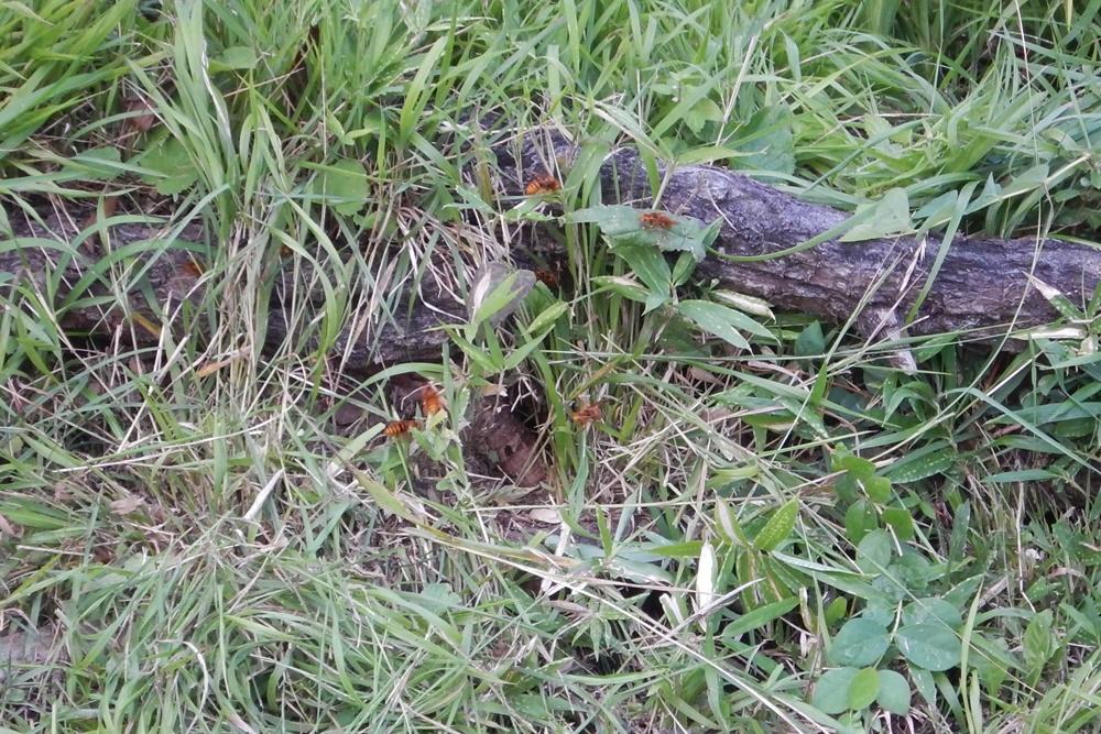 草刈りとハチ退治_c0111229_19542586.jpg