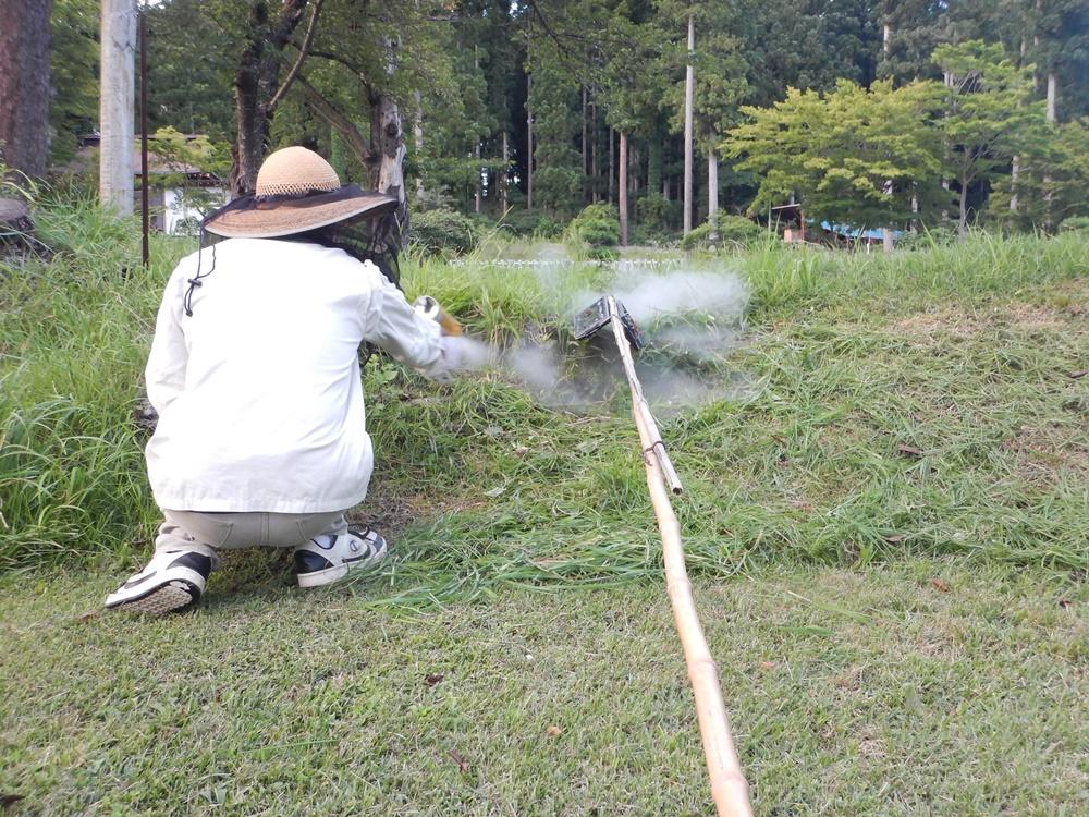 草刈りとハチ退治_c0111229_19543494.jpg