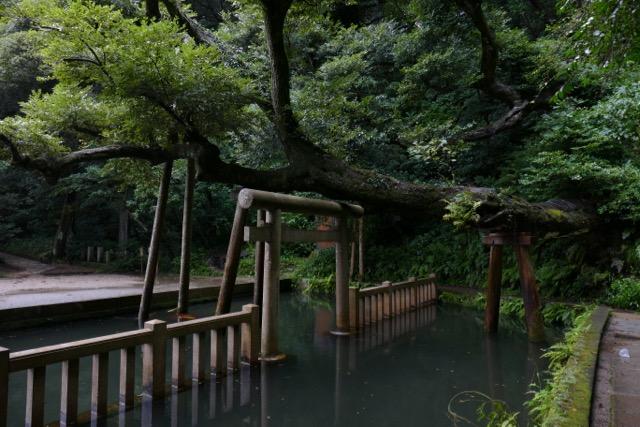 鹿島神宮さまから始まる五社参り by Meg_c0008664_19124294.jpg