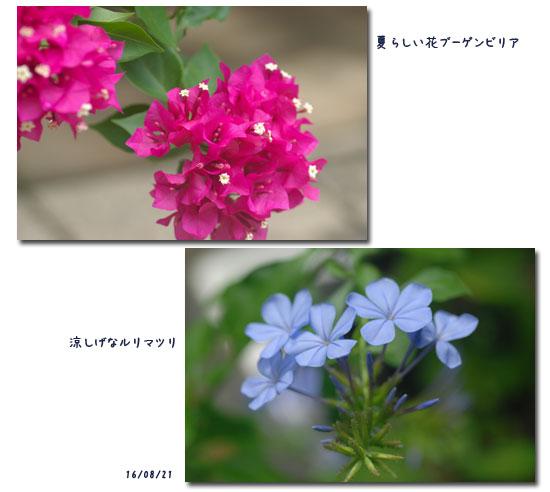 c0051105_23483992.jpg