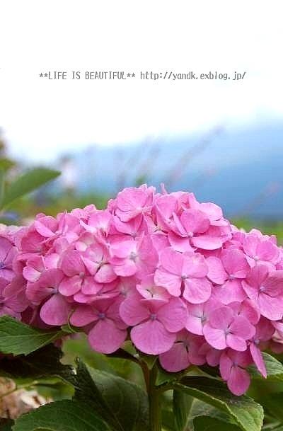 夏休み旅行@河口湖*2016①_d0083623_22434554.jpg