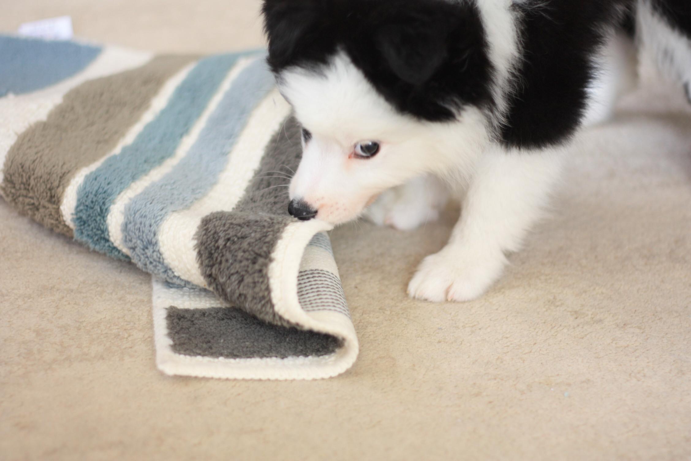 子犬のいたずら_b0174042_15475964.jpg