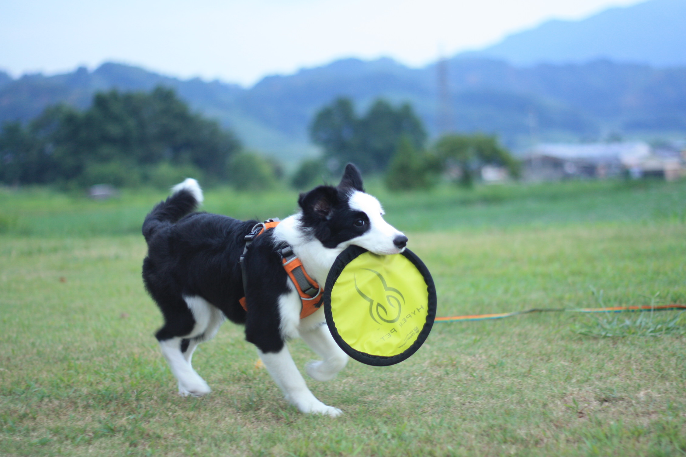 子犬のいたずら_b0174042_15595254.jpg