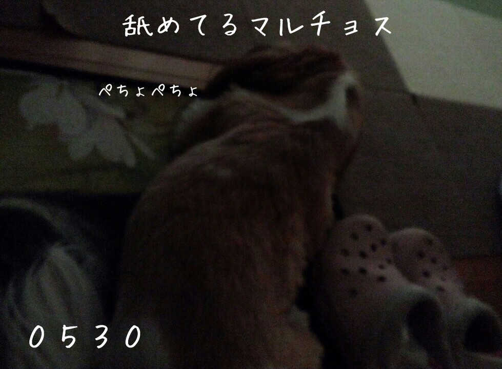 b0306158_14573707.jpg