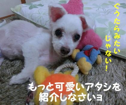 b0193480_1136437.jpg
