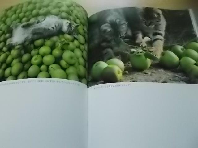 岩合さんの猫写真集と夜ご飯_f0316507_13234907.jpg