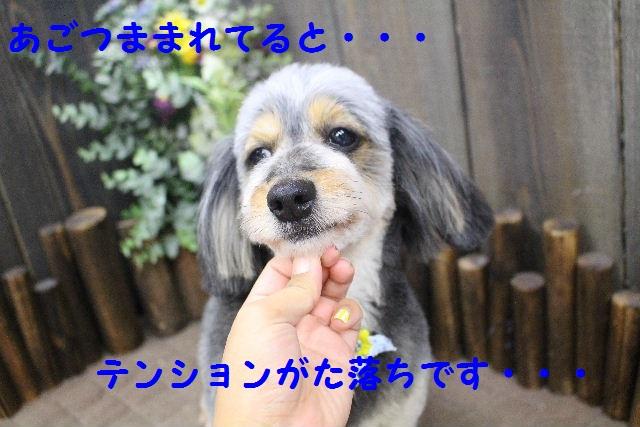b0130018_2251139.jpg