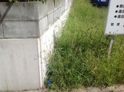 駐車場除草作業_c0186441_17495627.jpeg
