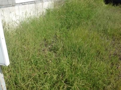 駐車場除草作業_c0186441_17510260.jpeg