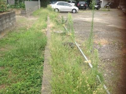 駐車場除草作業_c0186441_18082186.jpeg