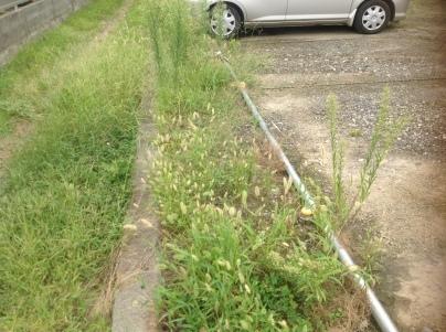 駐車場除草作業_c0186441_18083923.jpeg