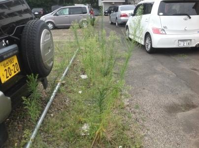 駐車場除草作業_c0186441_18130810.jpeg