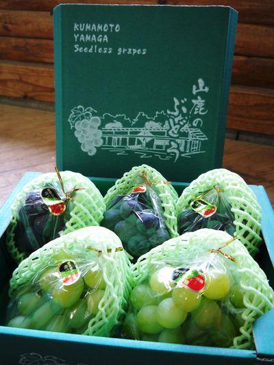 熊本ぶどう 社方園 第9回ぶどう祭り その2_a0254656_18365531.jpg