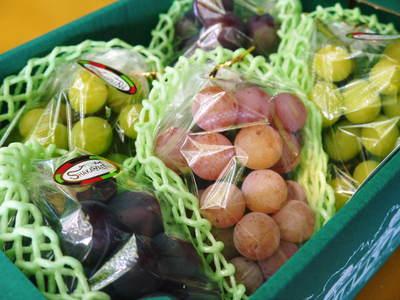 熊本ぶどう 社方園 第9回ぶどう祭り その2_a0254656_19531546.jpg