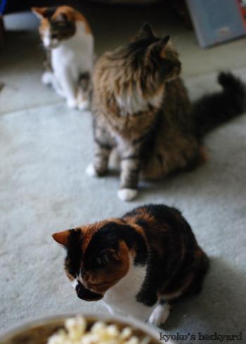 猫たちのポップコーン・パーティ_b0253205_04055038.jpg