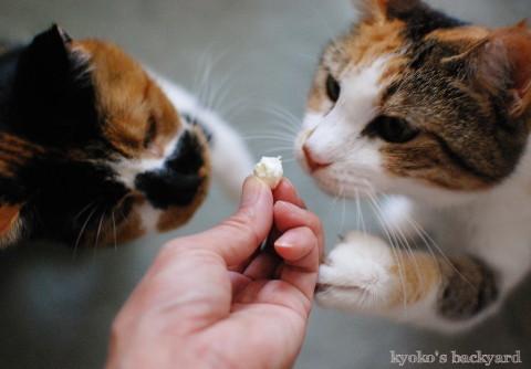猫たちのポップコーン・パーティ_b0253205_04123677.jpg