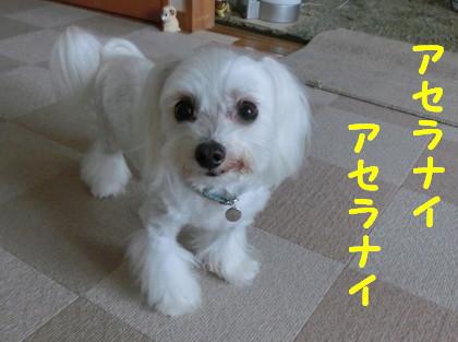 b0193480_14161340.jpg